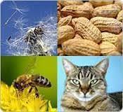 allergies-3