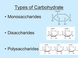 Type of Carbohydrates